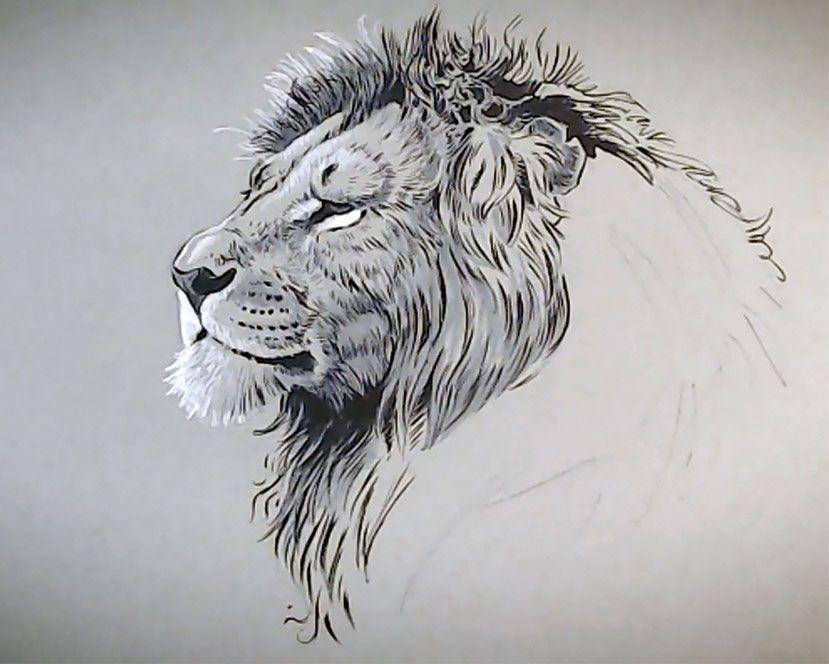 como desenhar animais adicionar partes escuras designe