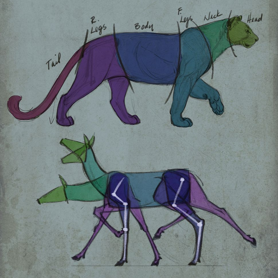 como desenhar animais entender anatomia designe