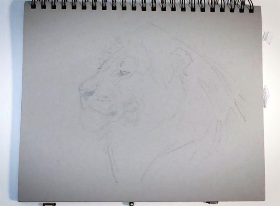 como desenhar animais esboco designe