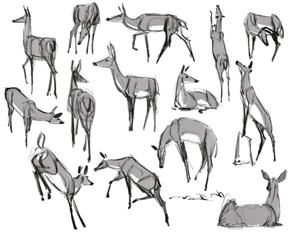 como desenhar animais faca pesquisa designe