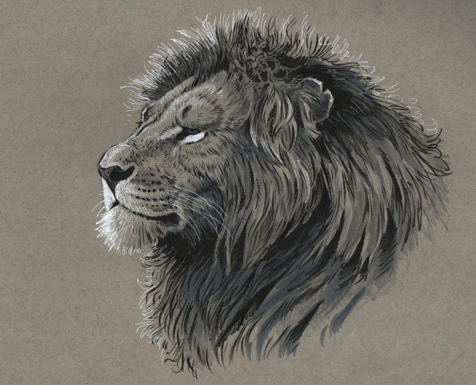 como desenhar animais highlights designe