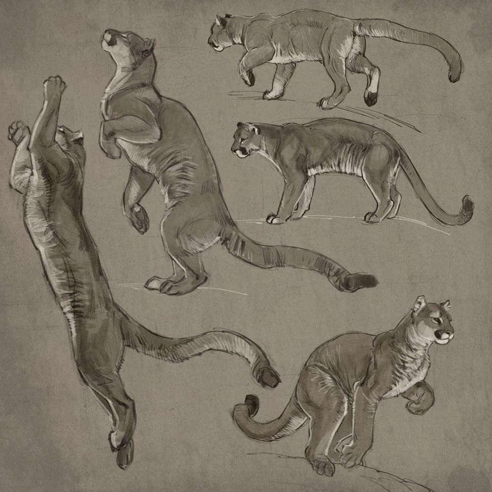 como desenhar animais proporcoes designe