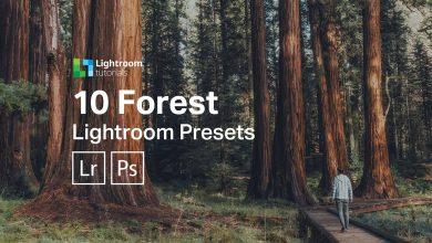 presets para lightroom gratuito para florestas